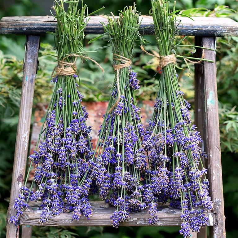 How to dry your Lavender!
