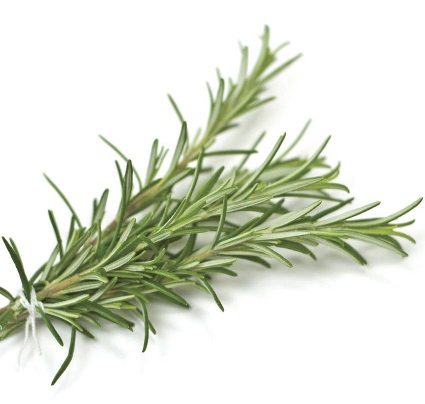 What can I use my Rosemary for?
